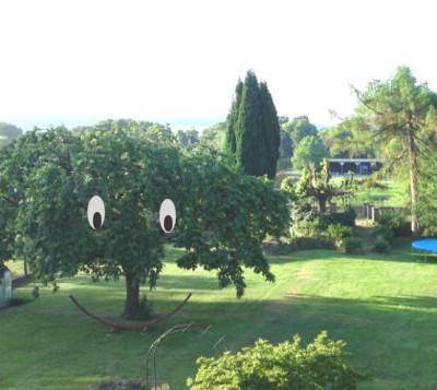 Der lachende Baum.