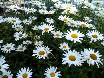 Milas Blumen. Teil 1