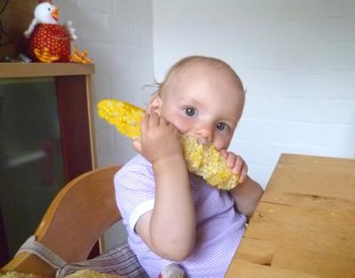 Mila knabbert an einem Maislkolben