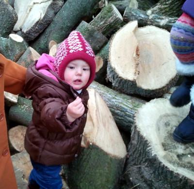 Mila kontrolliert Brennholz.