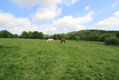 Mila mit Magic und Chawnee auf der Weide.
