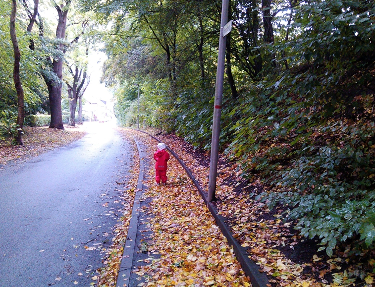 Mila auf dem Horstberg.