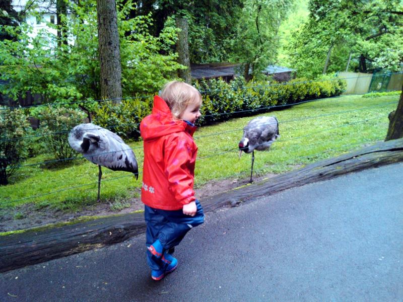 Mila im Vogelpark.