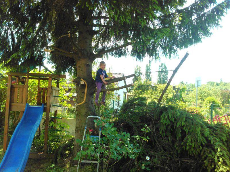 Mila klettert im Baum.