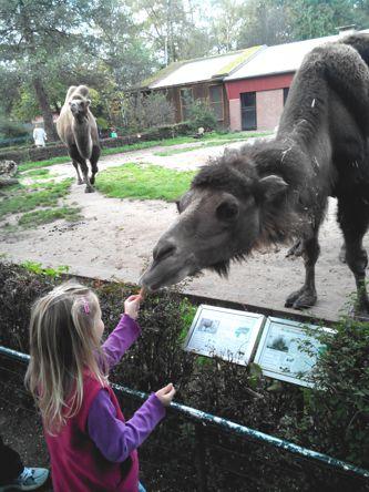 Mila im Zoo